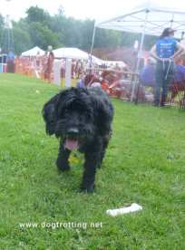 little black dog at Pawlooza 2019 dog festival