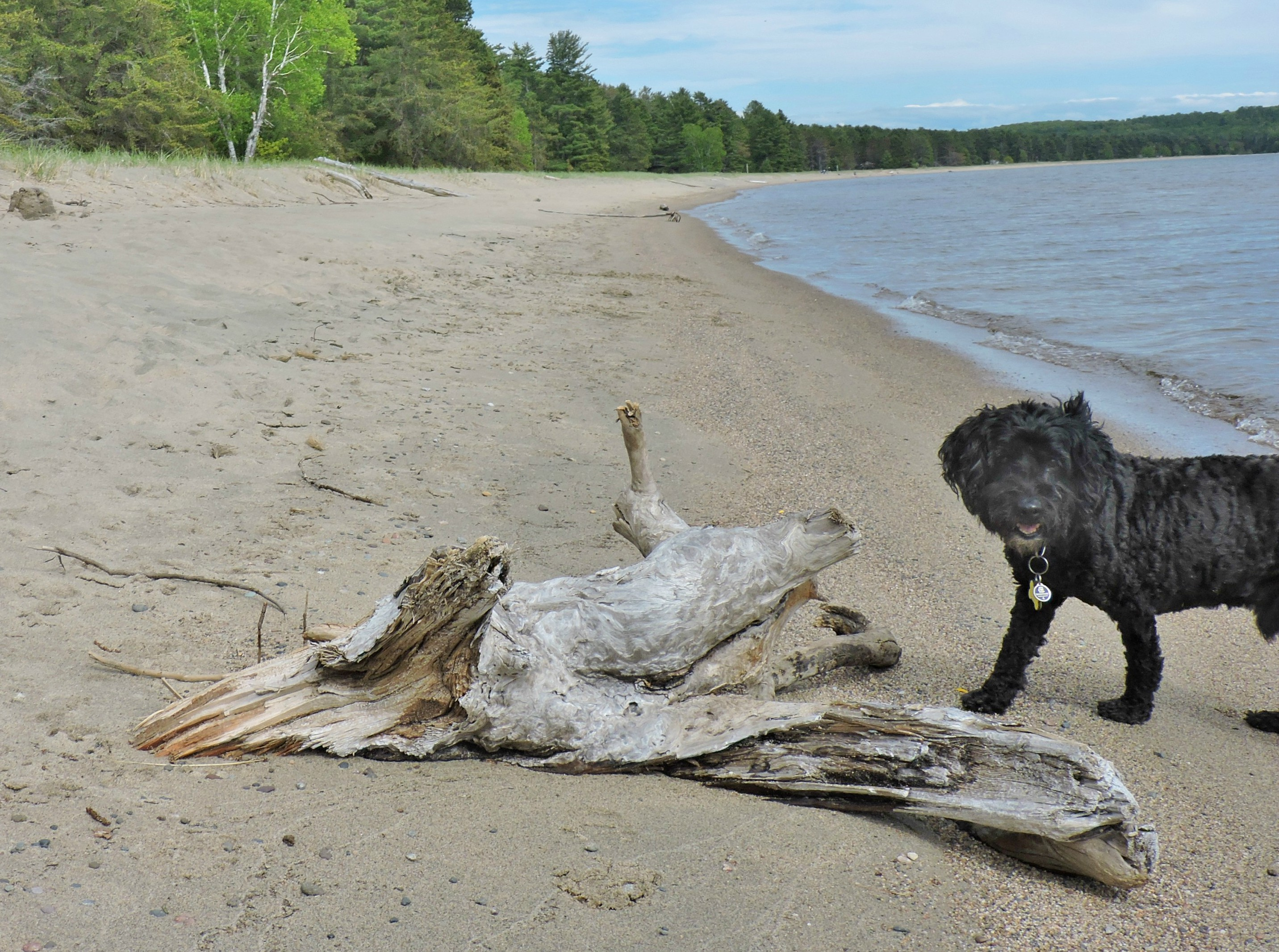 dog on dog beach pancake bay ontario canada