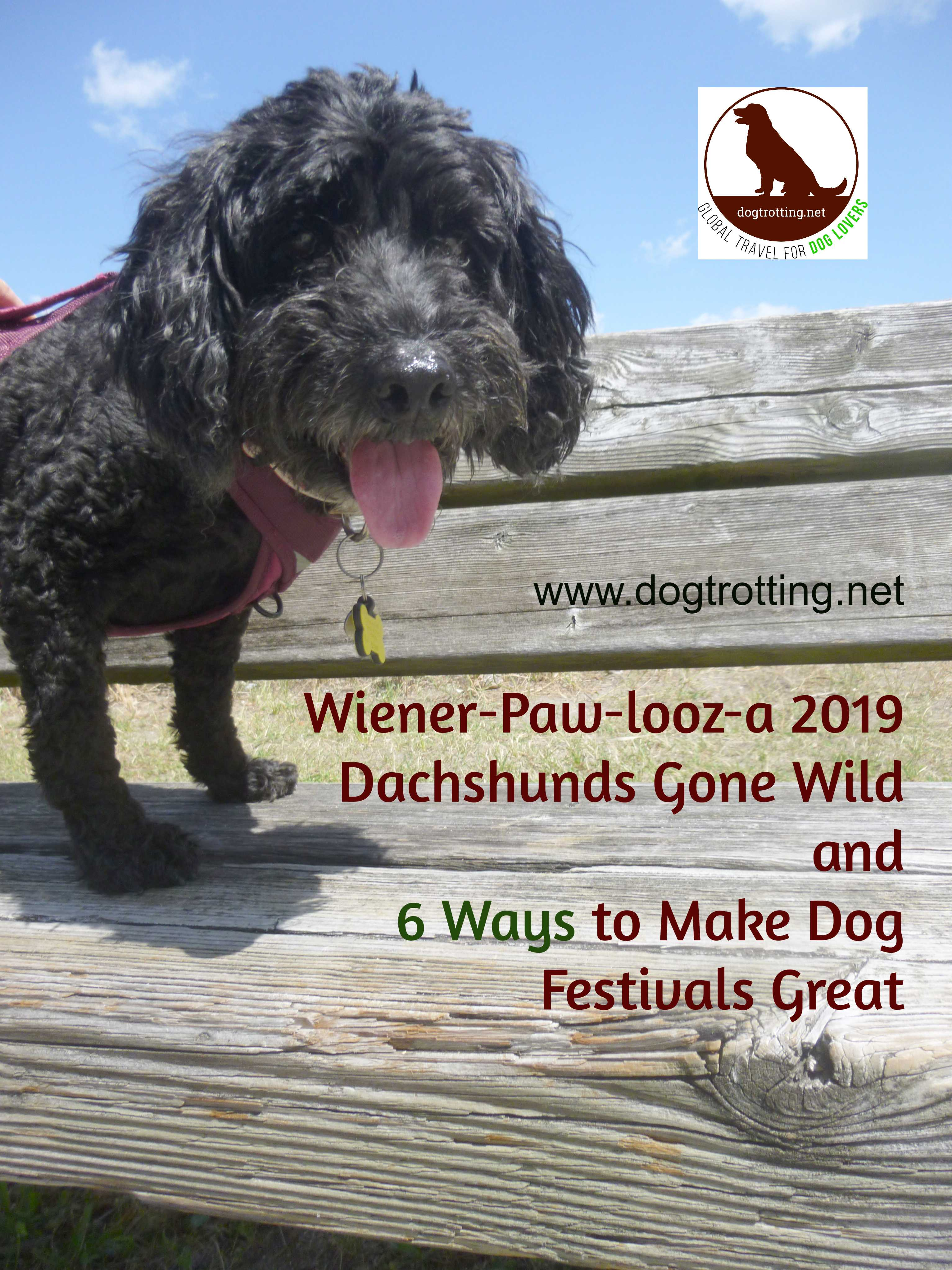 Wiener-paw-looz-a Wiener-paw-rocks! Dachshunds Go Wild & 6 Ways to Make Dog Festivals Great