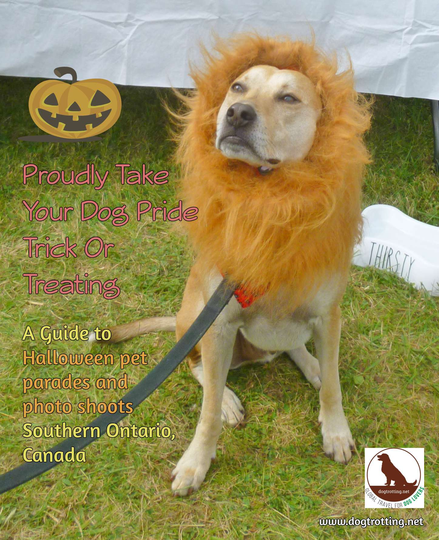 dog in lion costume