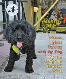 black dog in front of ottawa haunted walk office