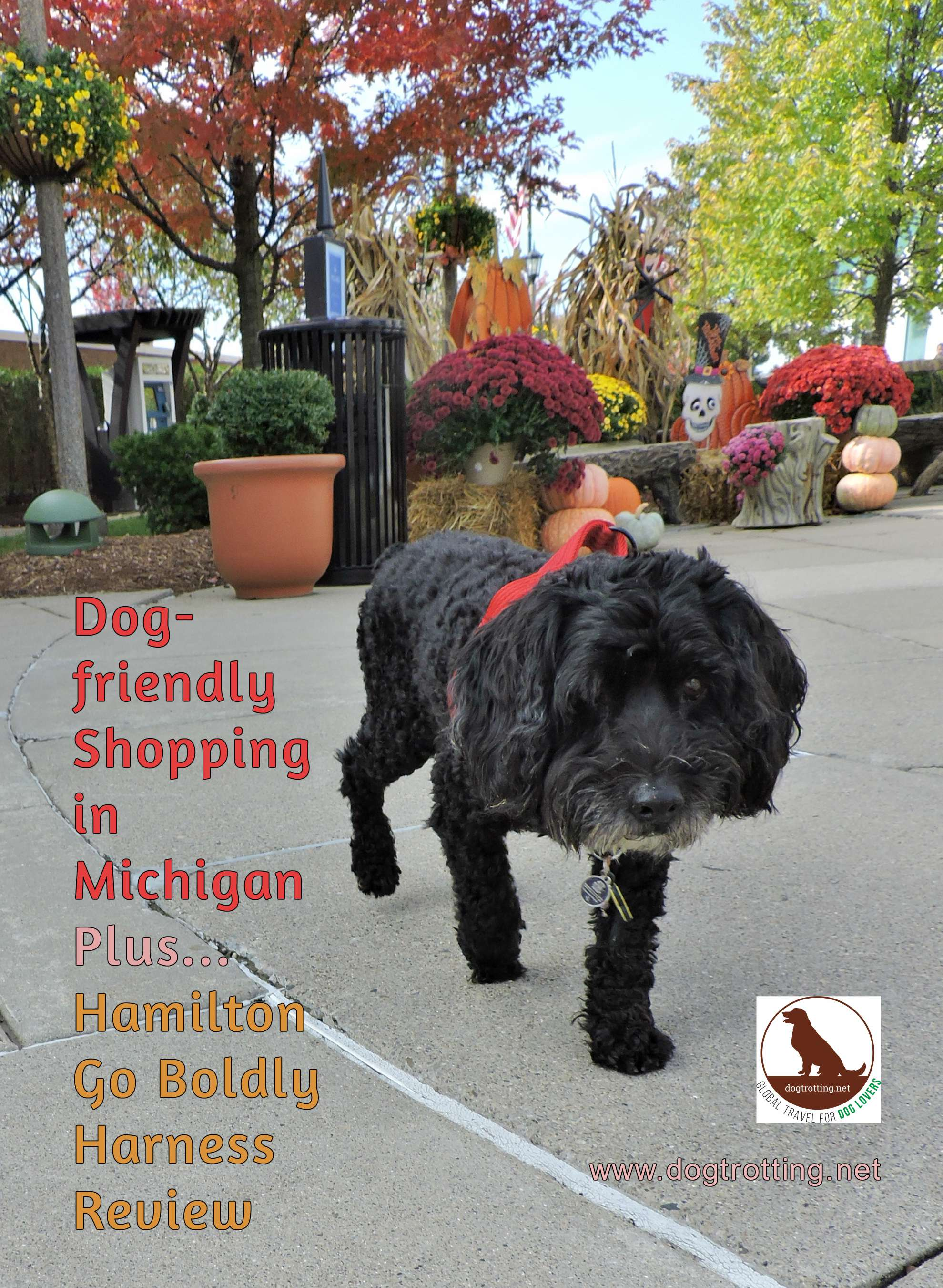 cute black terrier at Michigan outdoor mall with text: dog-friendly shopping in Michigan