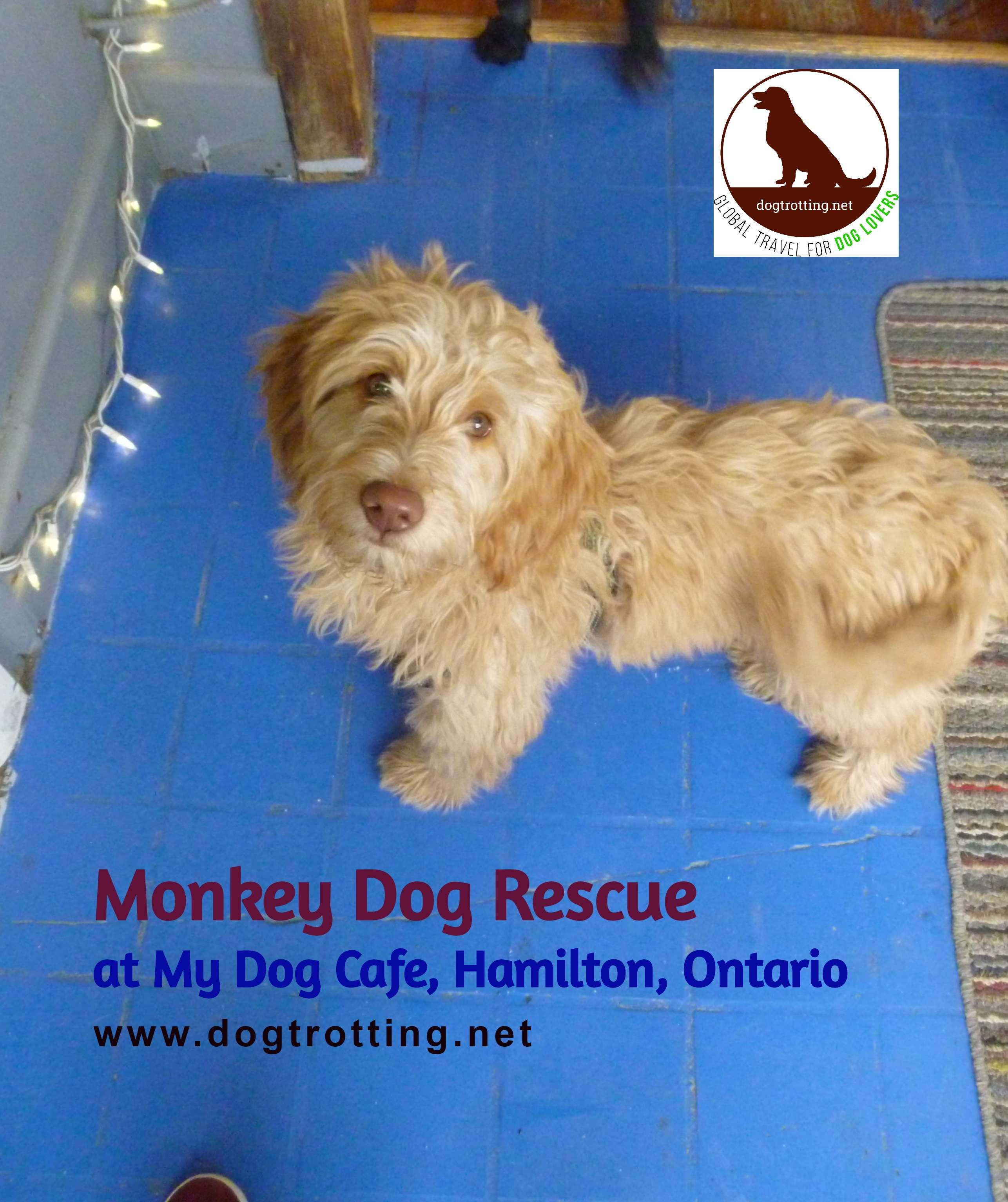Update: Holiday Online Auction for Monkey Dog Rescue – Don't Shop, Bid!