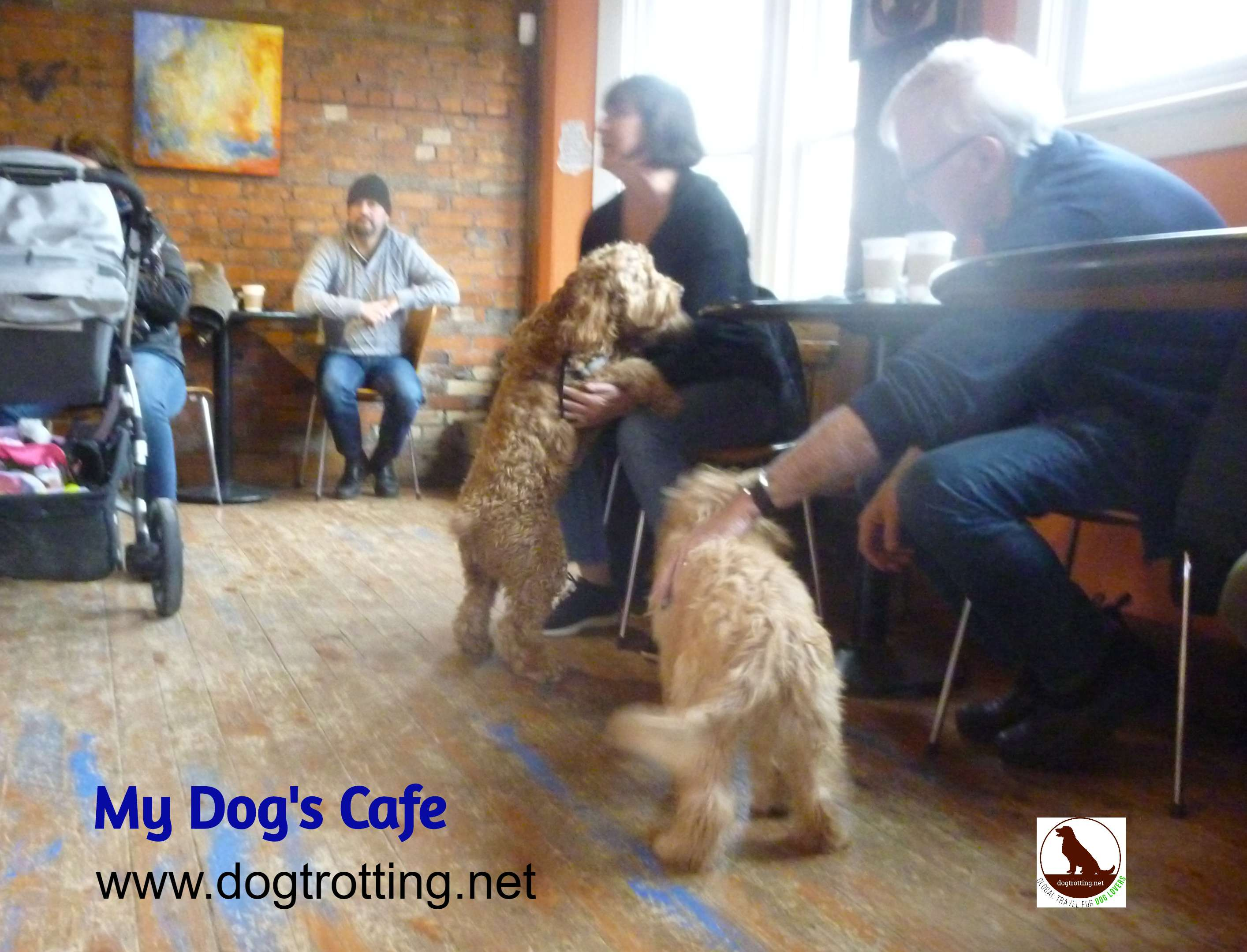inside My Dog's Cafe in Hamilton Ontario
