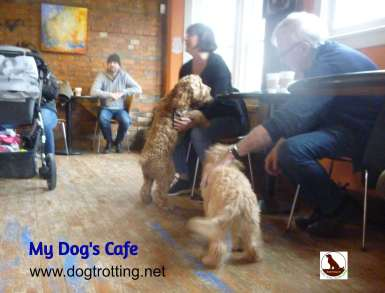 inside My Dog's Cafe in Hamilton Ontario