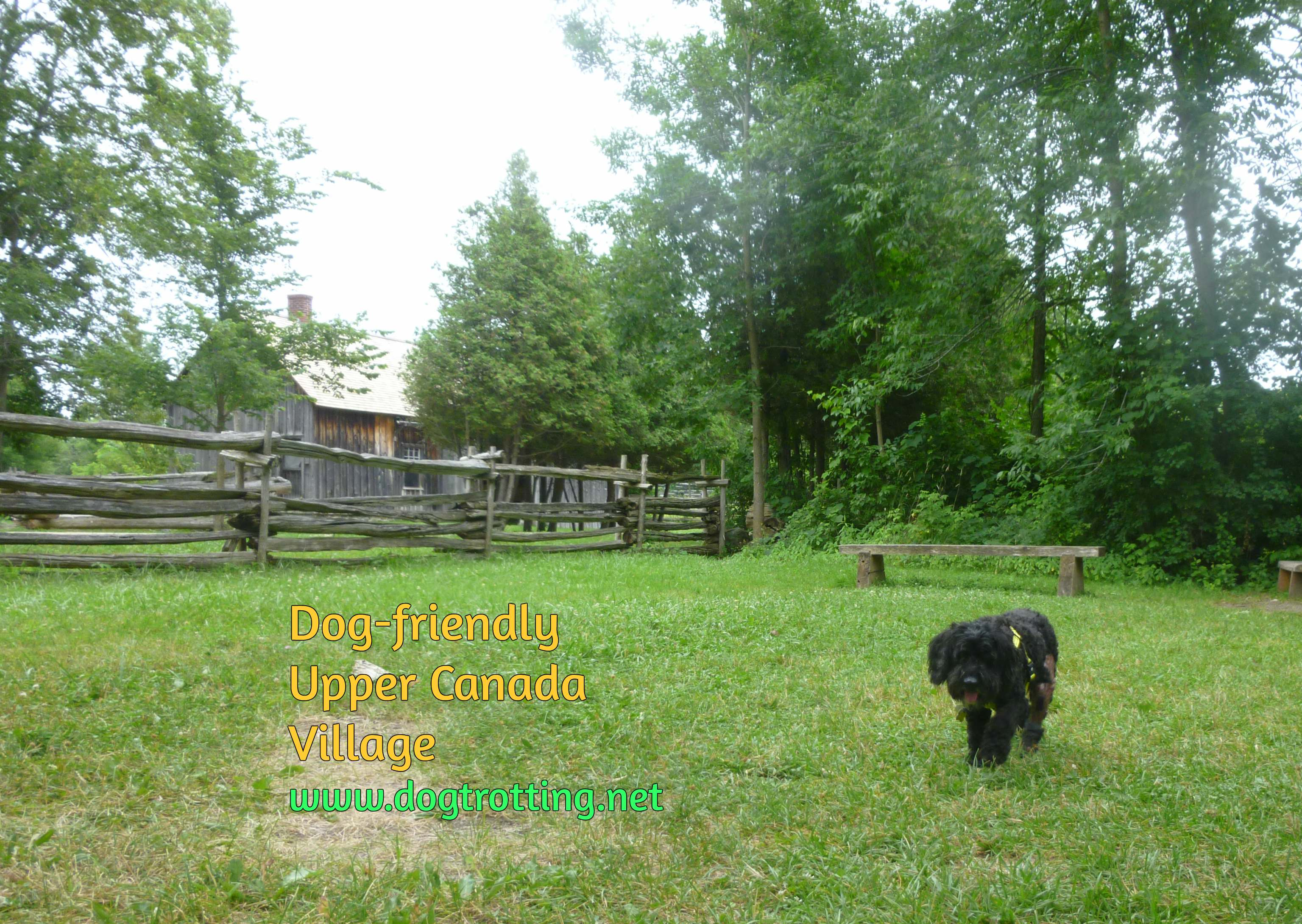 dog at dog-friendly Upper Canada Village