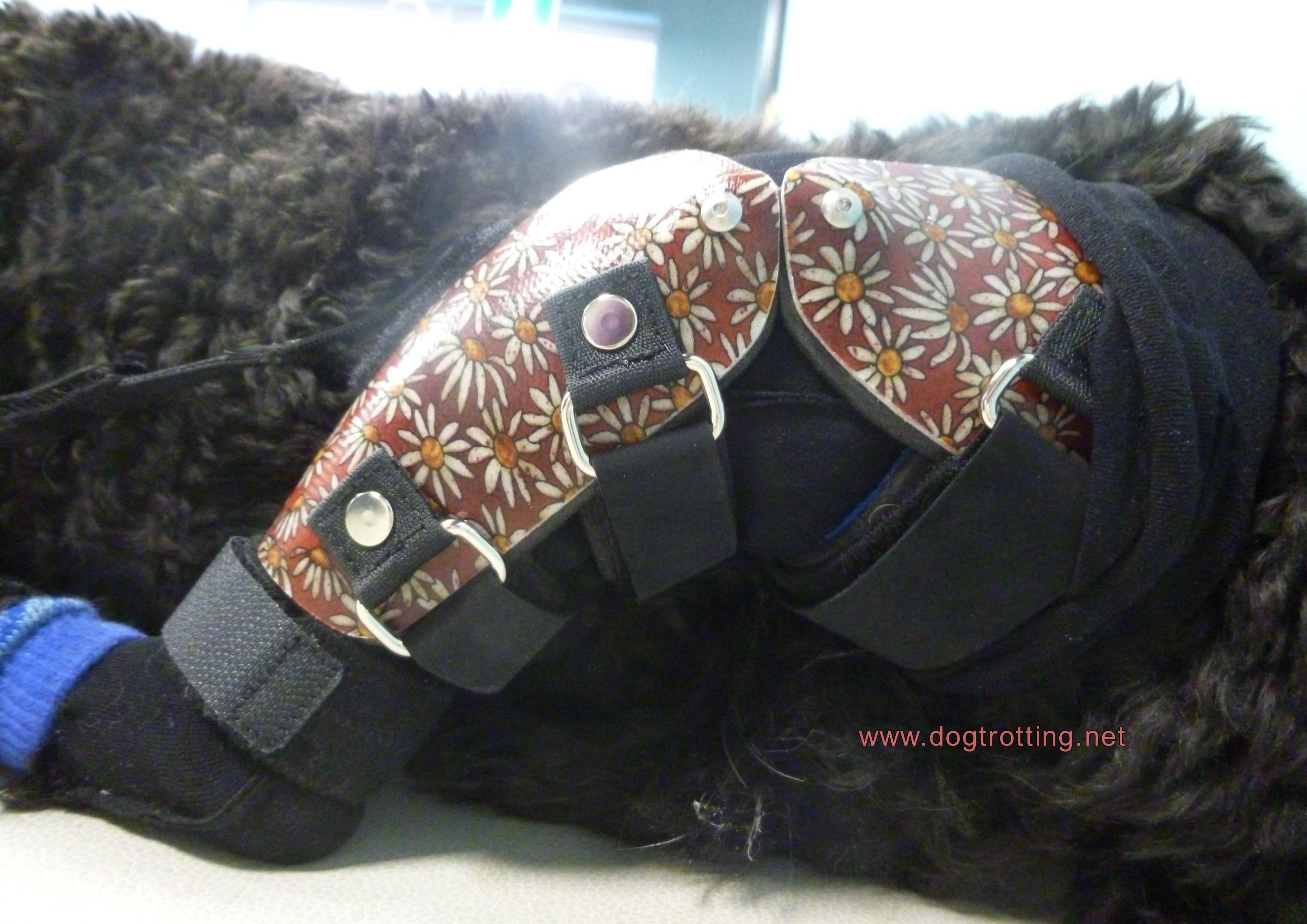 close up of dog back leg brace