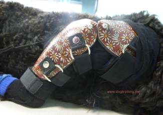 close up of dog back leg brace