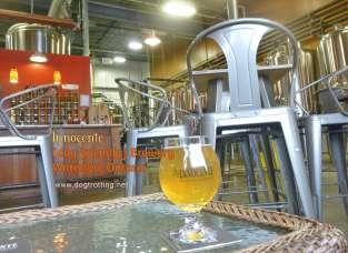 inside dog-friendly brew pub in waterloo ontario
