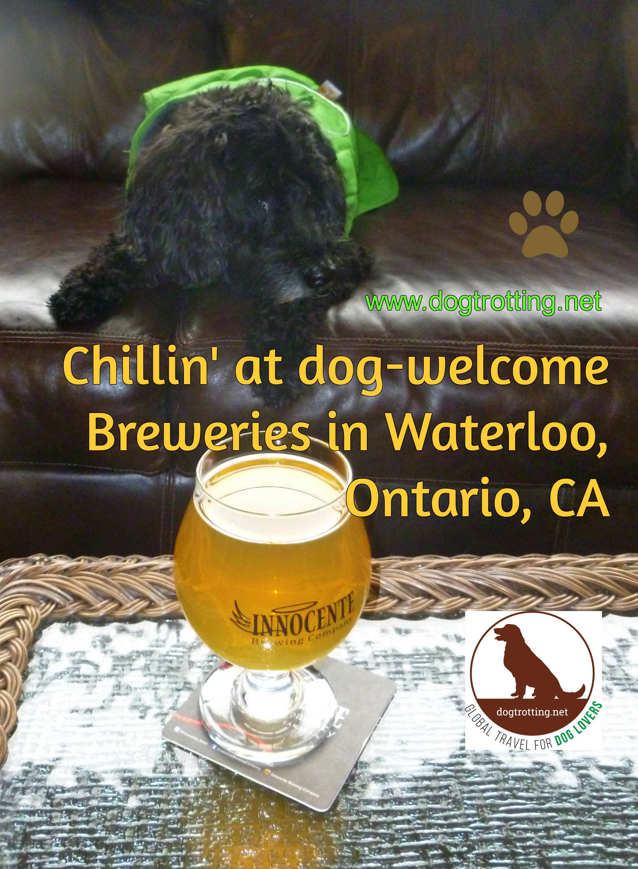 Travel Kitchener, ON: Innocente Dog-friendly Brewery. Cheers.