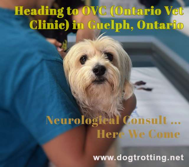 Our not-so-fun road trip: Neurological Consult at Ontario Vet College, Guelph, ON (Part One)