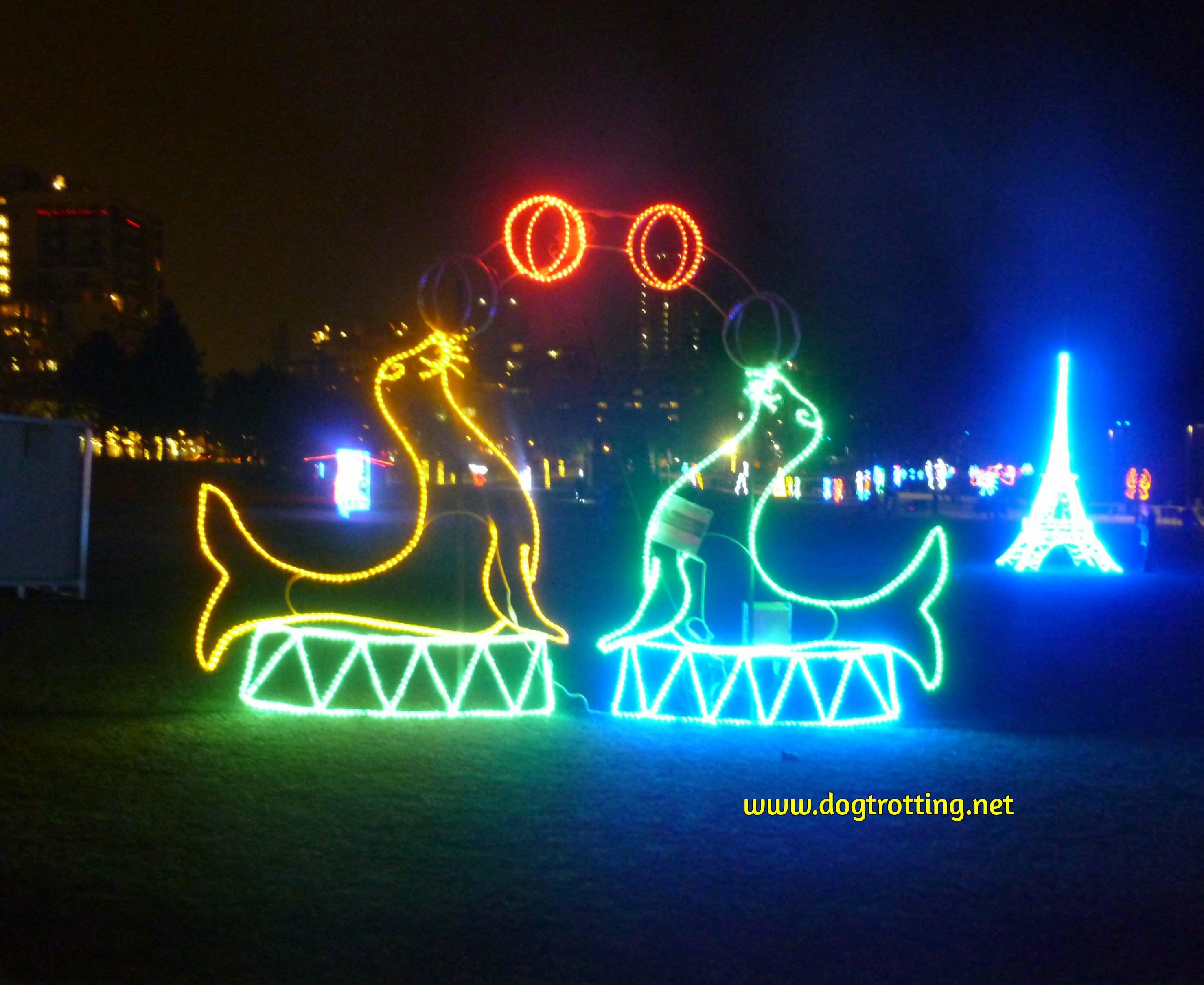 Seal lights at the Burlington Festival of Lights
