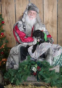 dog with Father Christmas