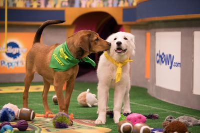 Animal Planet's Dog Bowl and Puppy Bowl: Better than that Other Bowl
