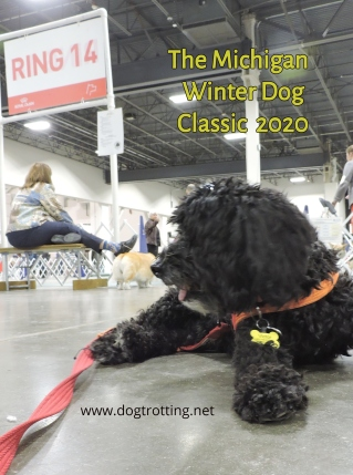 black dog at The Michigan Winter Dog Classic dog show