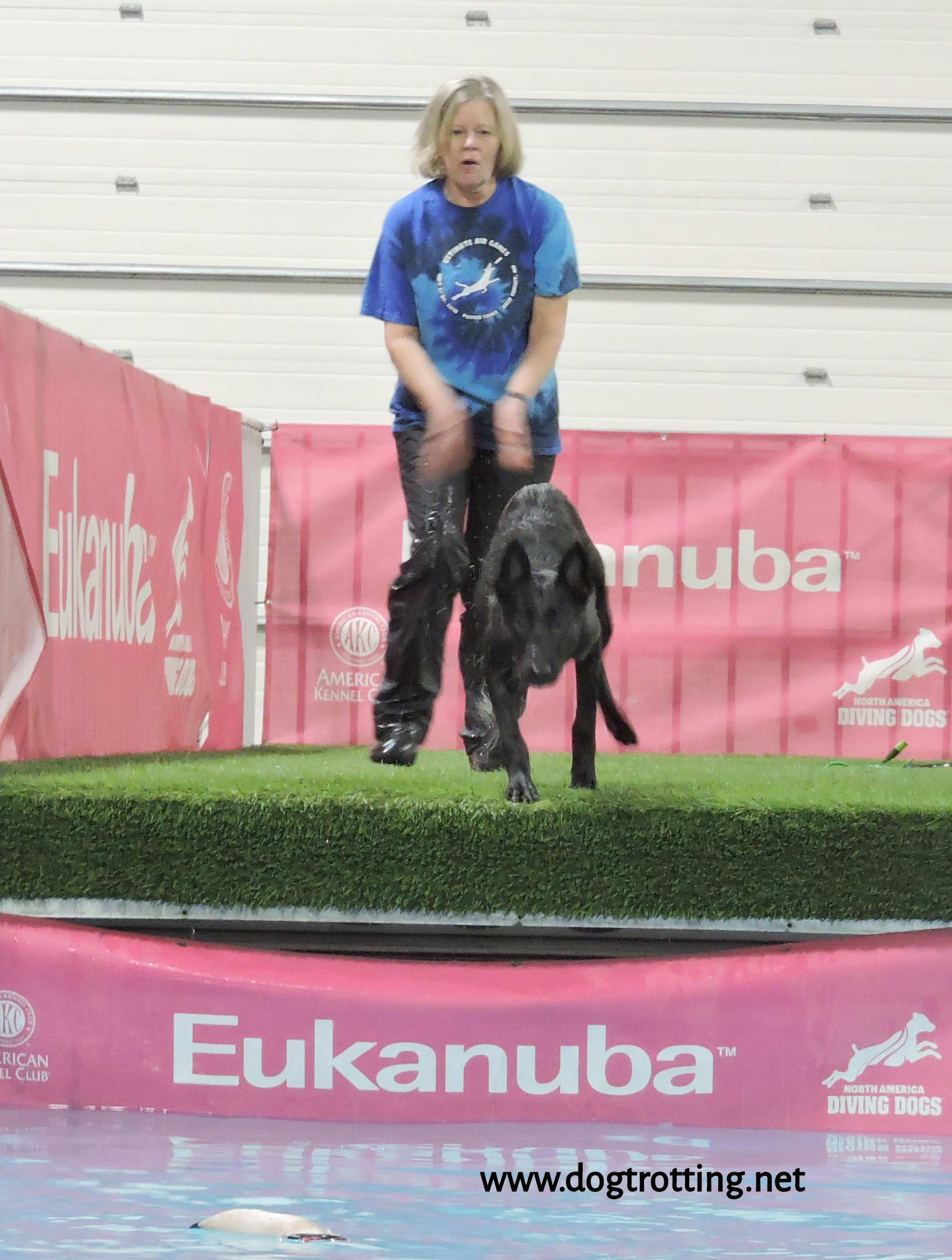 dock diving at The Michigan Winter Dog Classic dog show