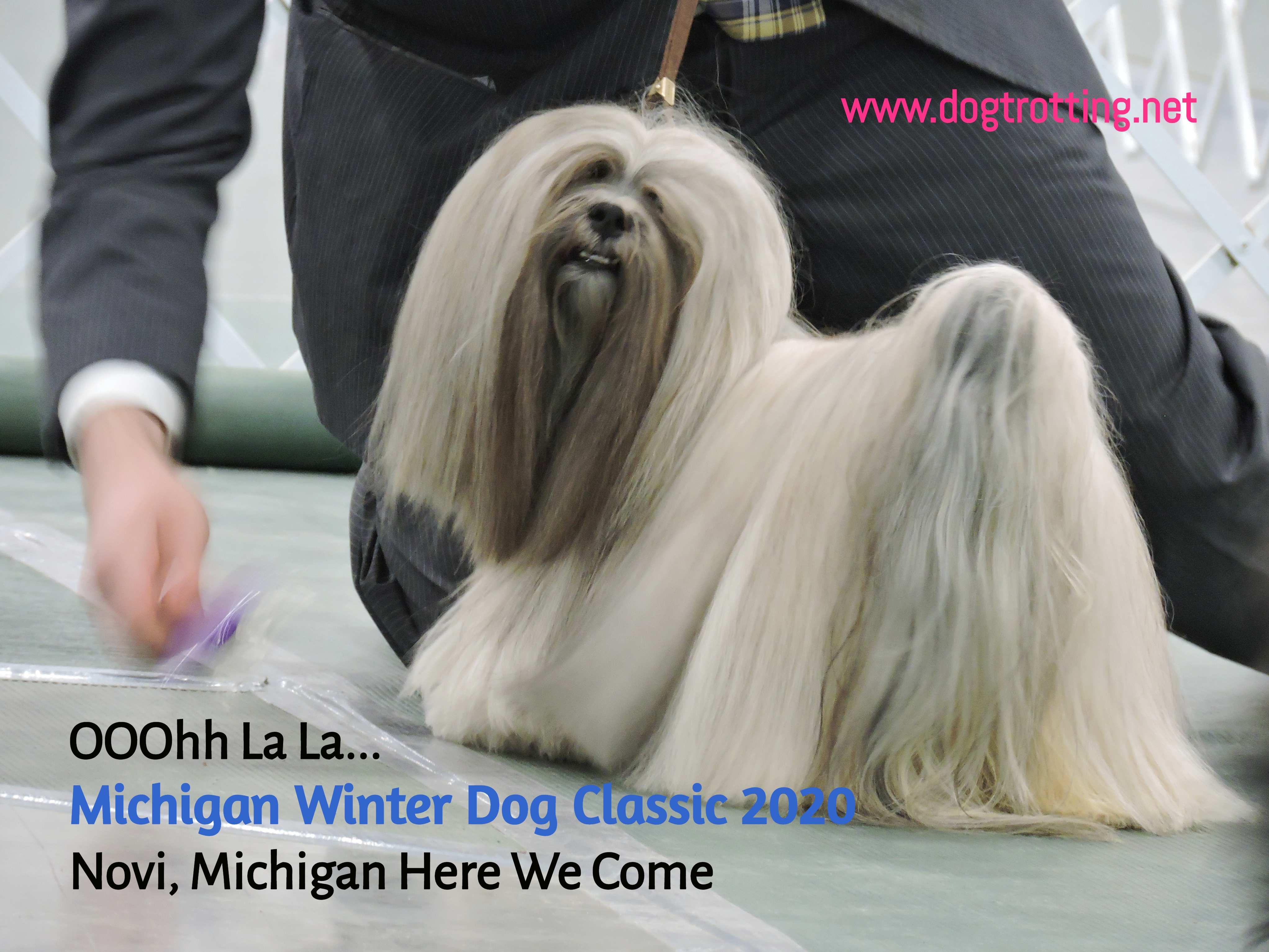 Travel Novi, MI: My Mutt goes to The Michigan Winter Dog Classic 2020
