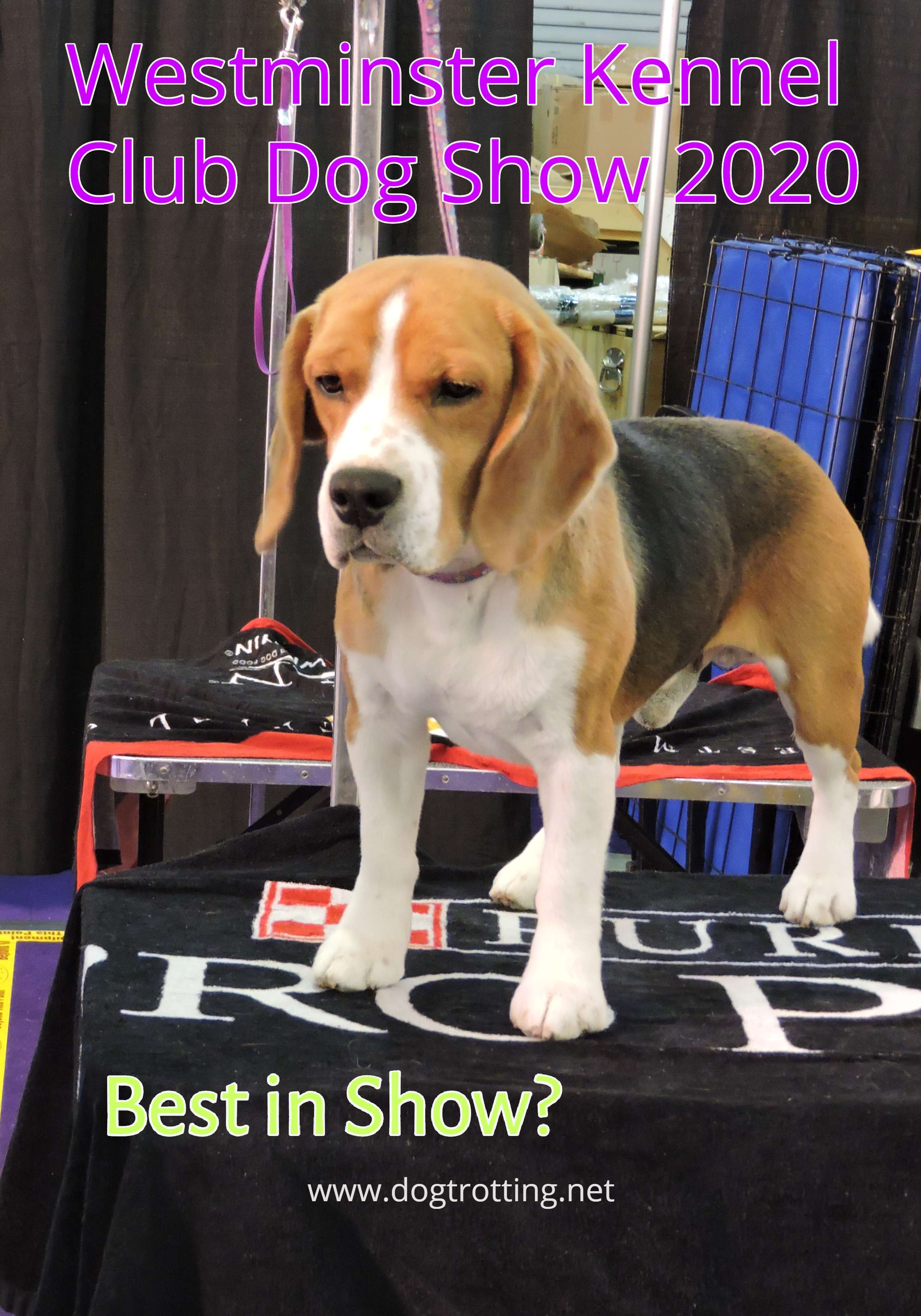 144th Westminster Dog Show 2020 Best in Show Winner is …