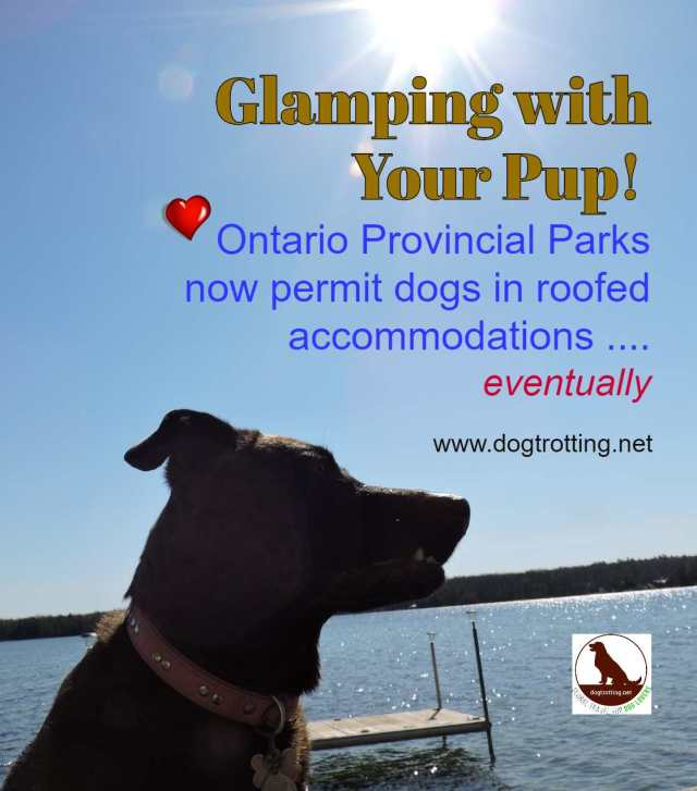 dog on dock by lake with text: glamping with your Pup! Ontario Provincal Parks now permit dogs in roofed accommodations