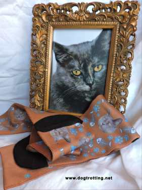 Picture of cat with Printfield custom socks