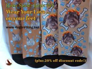 custom socks from PrintsField with dogs and cats on them