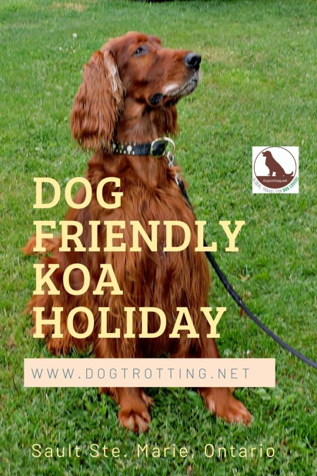 sitting Irish Setter dog with text: dog friendly KOA Holiday Sault St. Marie, Ontario