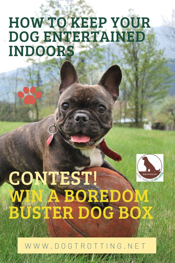 CONTEST! Boredom Busting Dog Box … and ways to entertain your dog at home