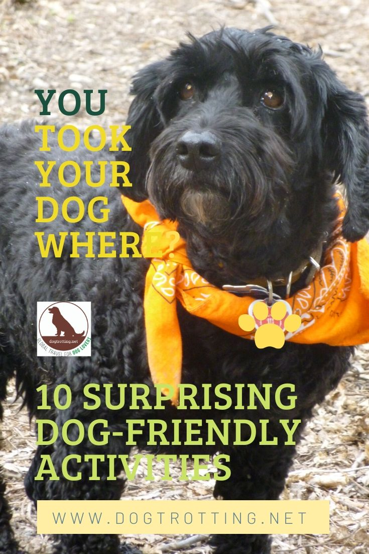 You Can Take Your Dog Where? 10 Dog-friendly Surprises