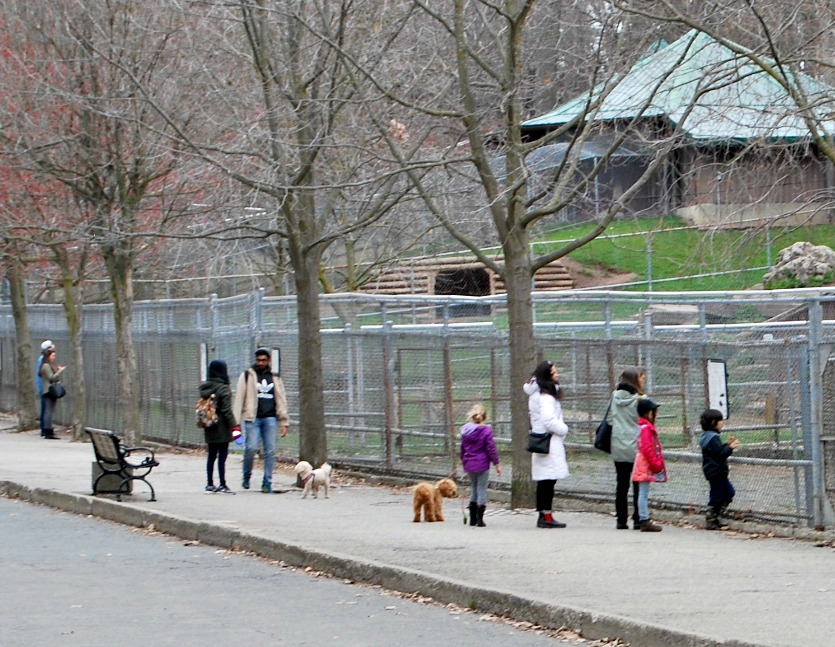 people and dogs walking in the High Park Zoo, Toronto