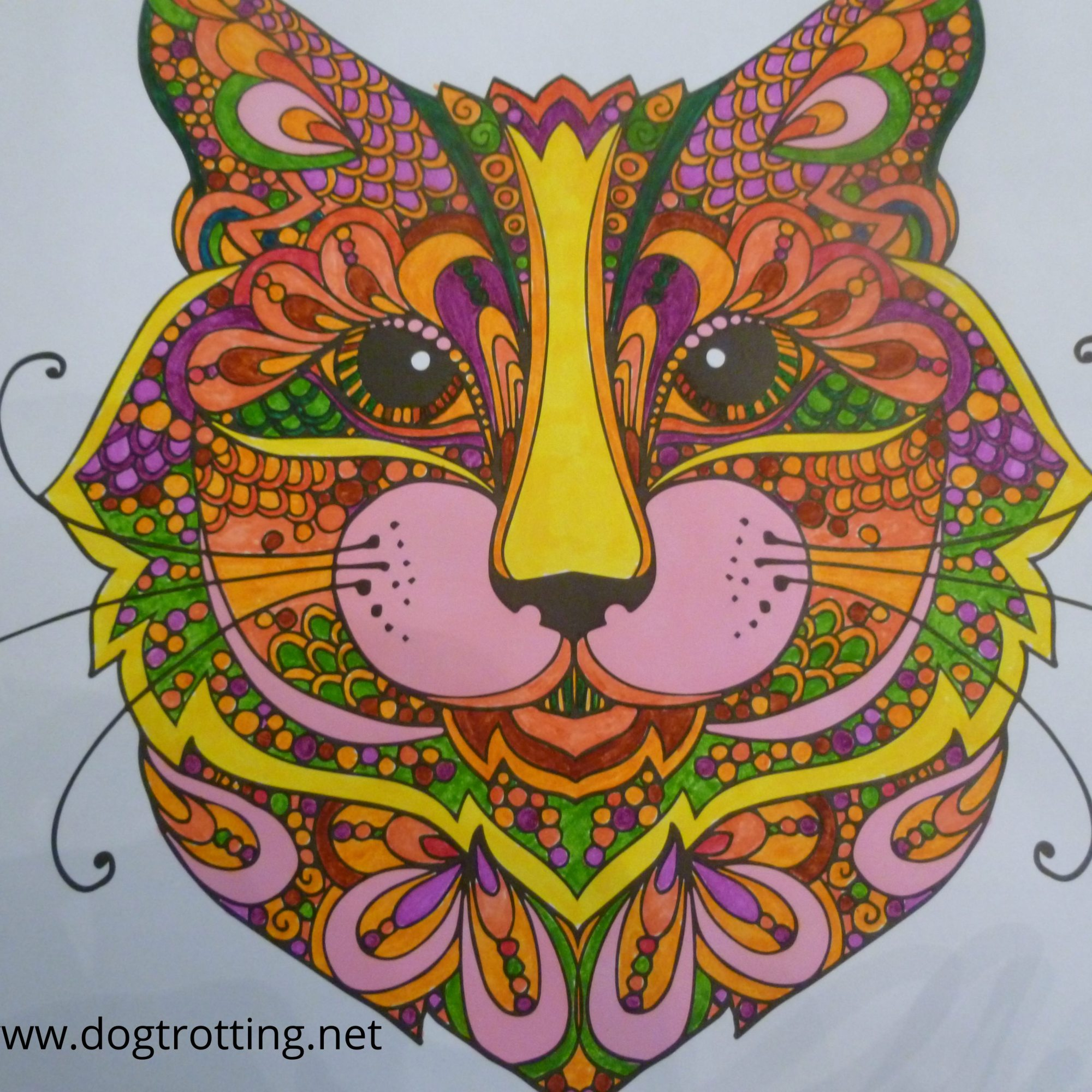 cat image from colouring book