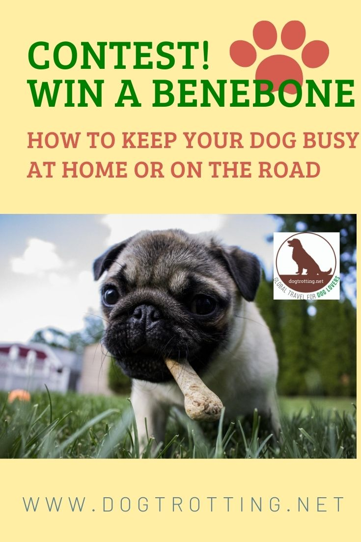 Contest! Win a Benebone! Keep your dog busy.