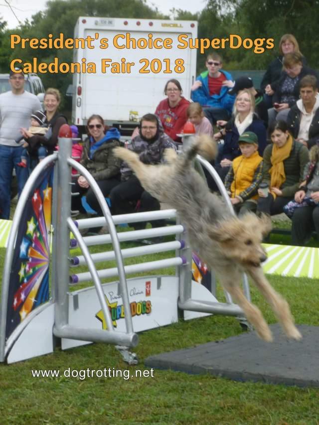President's Choice SuperDogs dog jumping hurdles